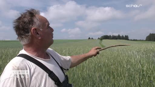 Borkenkäfer-Plage trifft Großweißenbach aus heiterem Himmel