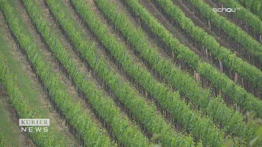 Klimawandel: Burgenland will mit Klonwein den Weinbau sichern