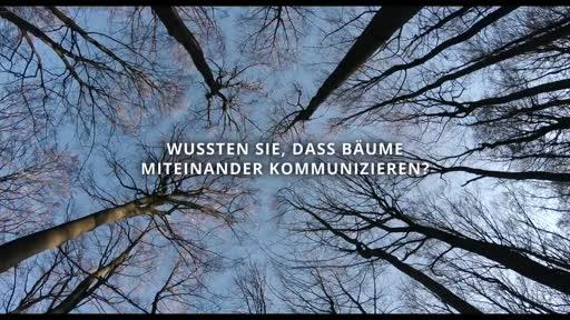 Das Geheime Leben Der Baume Film At